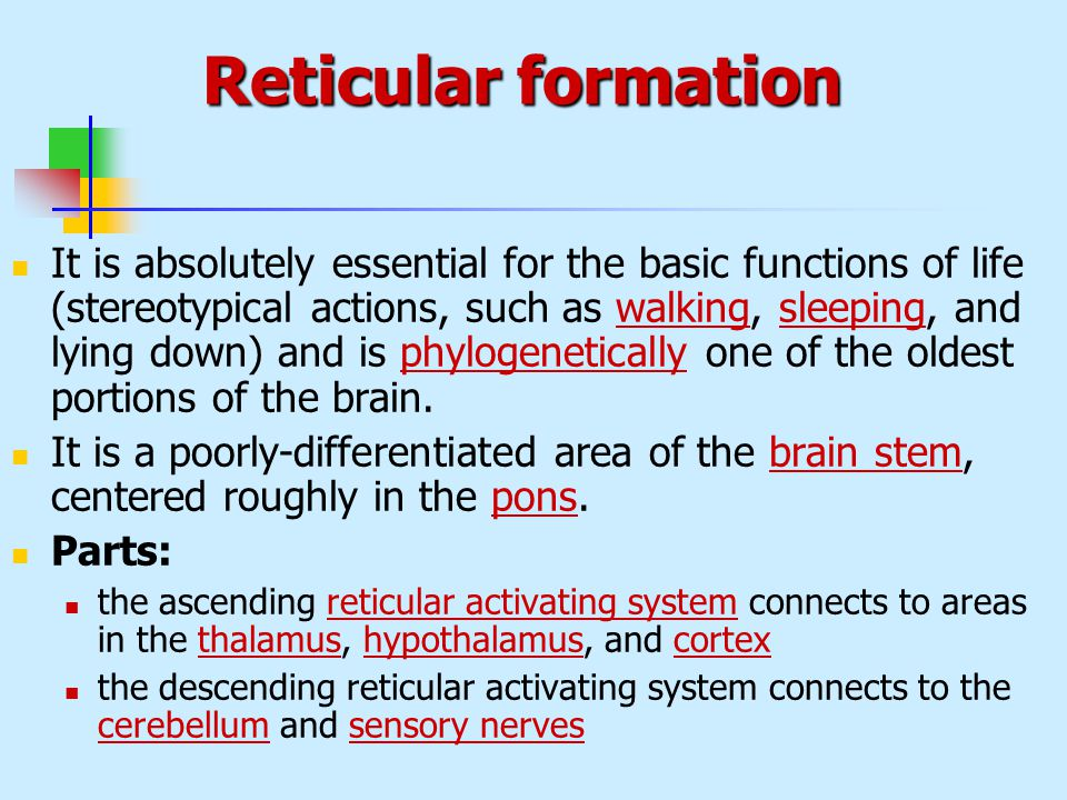 reticular formation function 1 the reticular formation has very diverse functions some of its nuclear groups have direct access to motor neurons in the brainstem and spinal cord.
