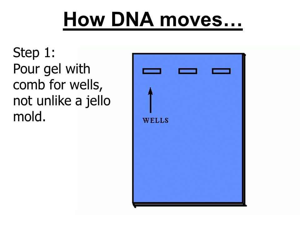 How DNA moves… Step 1: Pour gel with comb for wells,