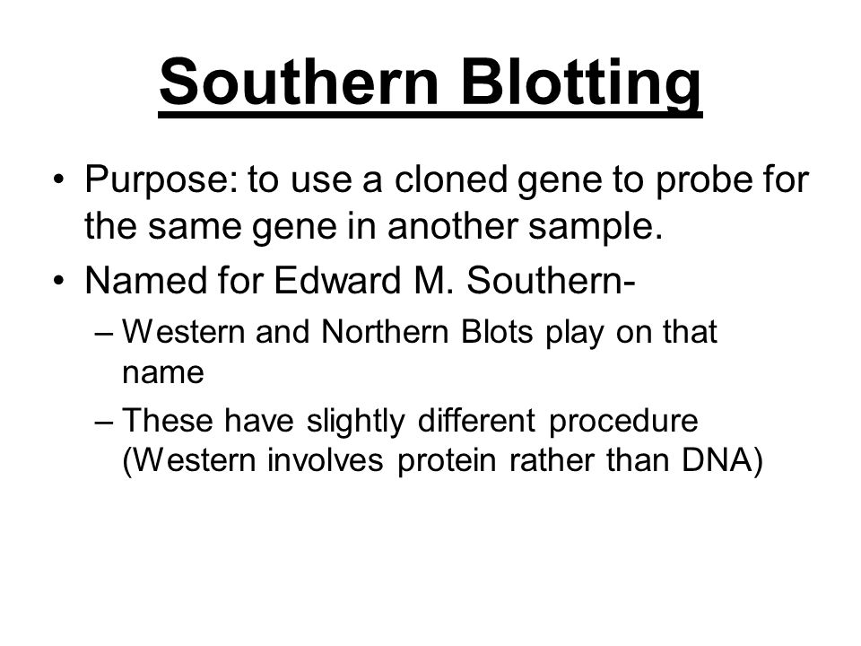 Southern Blotting Purpose: to use a cloned gene to probe for the same gene in another sample. Named for Edward M. Southern-