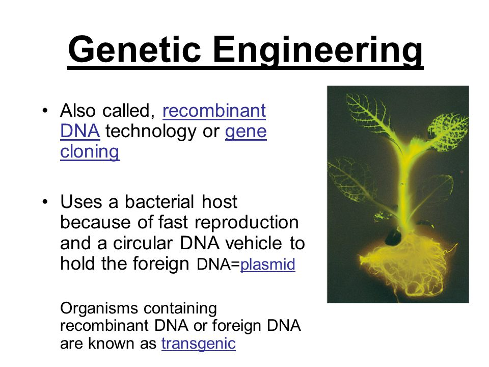 Genetic Engineering Also called, recombinant DNA technology or gene cloning.