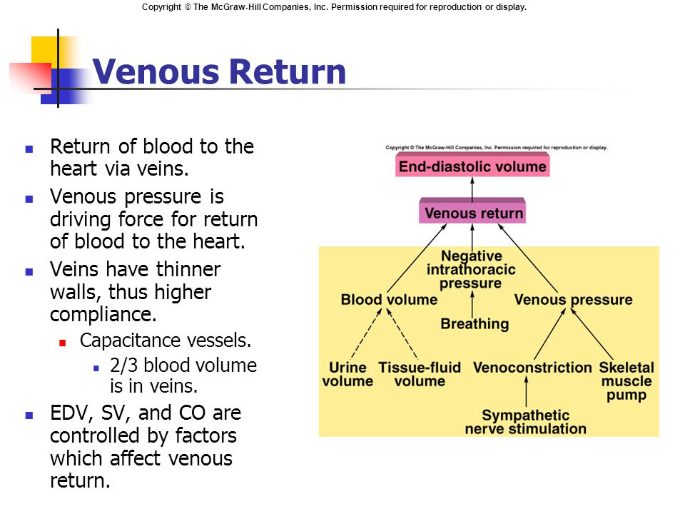venous return