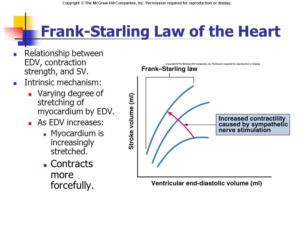 a perspective on the frank starling law The frank–starling law of the heart describes the heart's ability to enhance  contractility in response to increased cardiac filling this property is.