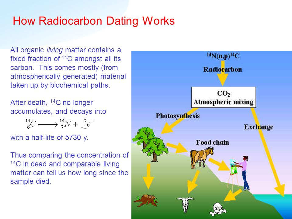 all about radiocarbon dating Tree-ring studies can tell us what the 14 c/ 12 c ratio was like before the industrial revolution, and all radiocarbon dating is made with this in mind how do we know what the ratio was before then, though--say, thousands of years ago.