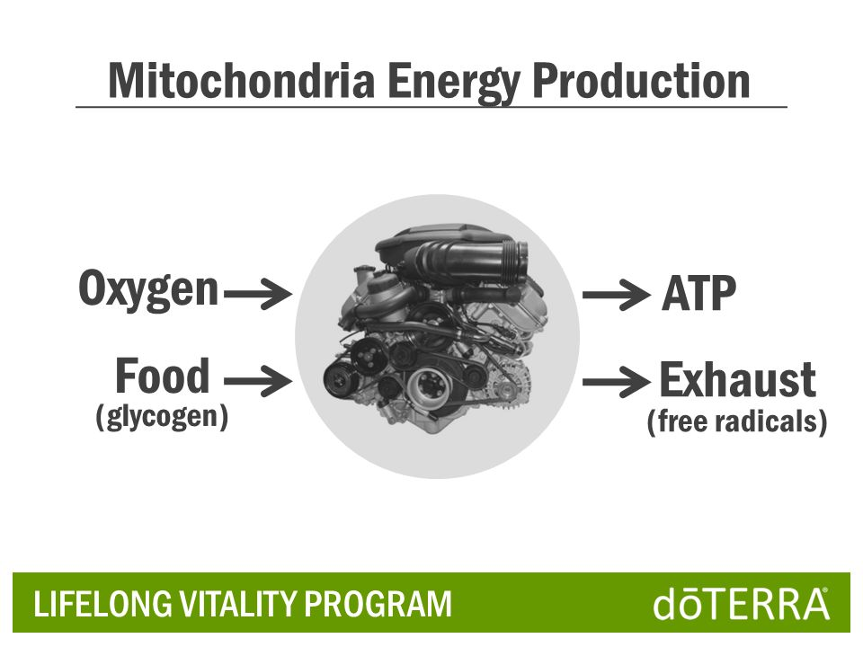 Mitochondria Energy Production