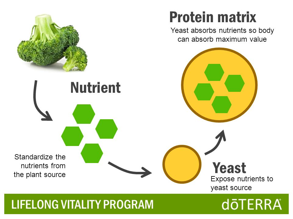 Yeast absorbs nutrients so body can absorb maximum value