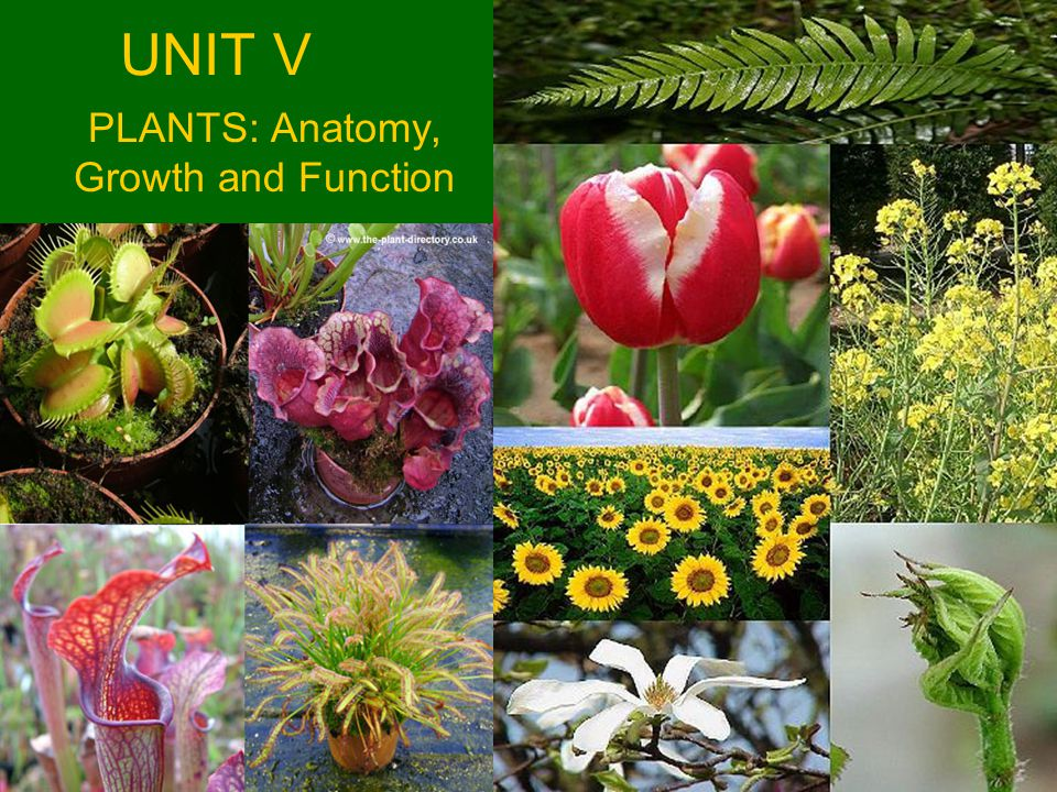 PLANTS: Anatomy, Growth and Function - ppt video online download