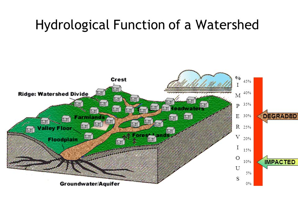 Hydrological Function of a Watershed