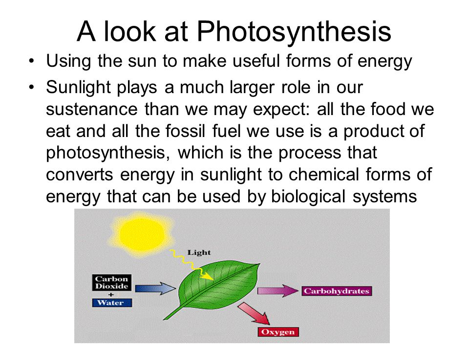 experiment the role of sunlight in photosynthesis The importance of sun's energy and photosynthesis the role of chlorophyll in plant an analysis of the laboratory experiment on photosynthesis in biology 399.
