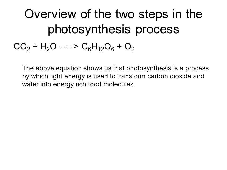 an overview of the basics of photosynthesis in plant life Campbell chapter 10: mastering biology questions study guide by micki617 includes 55 questions covering vocabulary, terms and more  photosynthesis is a redox .