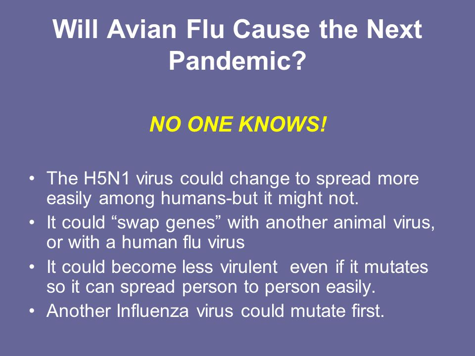 avian essay flu pandemic virus virus Avian influenza essays avian influenza is a contagious virus that usually infects all species of birds, but it has recently been tracked to infect humans as well.