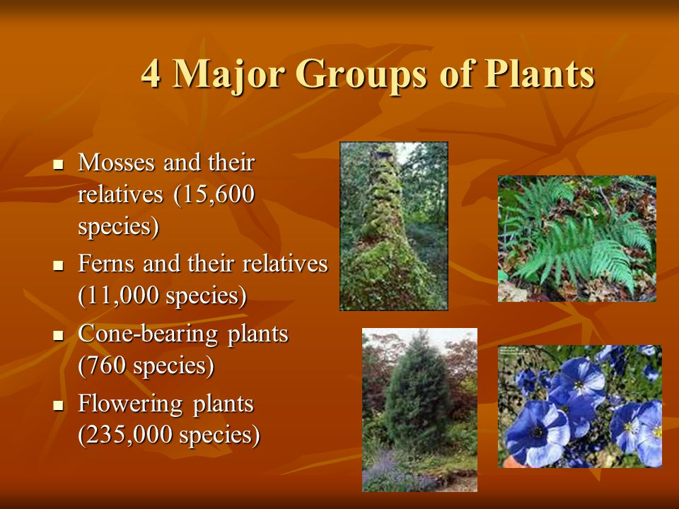 facts about the two major group of plants No group of animals has a higher rate of endangerment than amphibians  facing an extremely high risk of extinction in the wild — two more species than in.