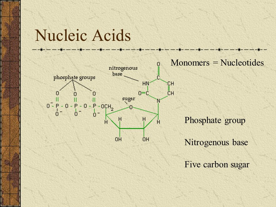 Nucleic Acids Monomers = Nucleotides Phosphate group Nitrogenous base