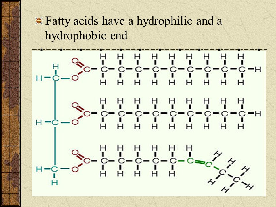 Fatty acids have a hydrophilic and a hydrophobic end