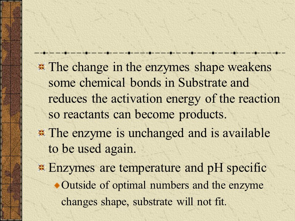 The enzyme is unchanged and is available to be used again.