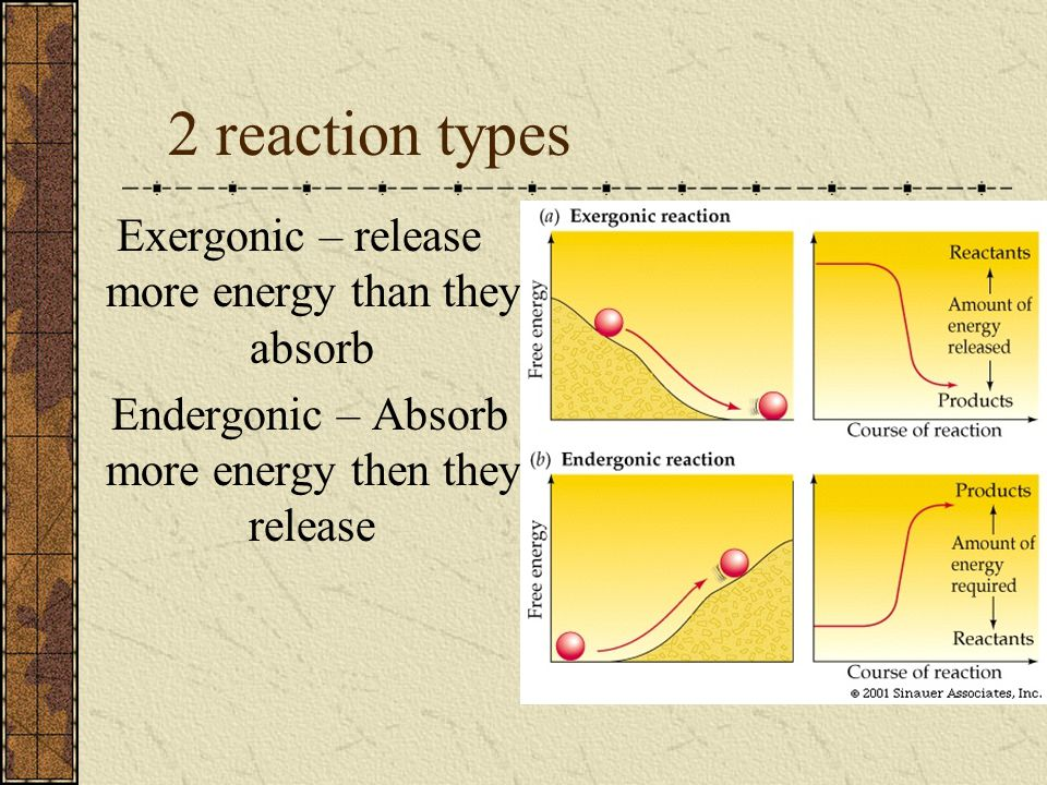 2 reaction types Exergonic – release more energy than they absorb
