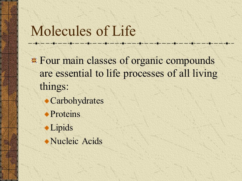 Molecules of Life Four main classes of organic compounds are essential to life processes of all living things: