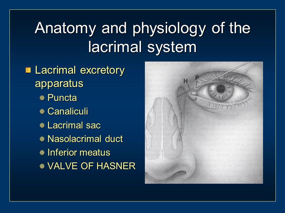 Nasolacrimal duct inferior meatus