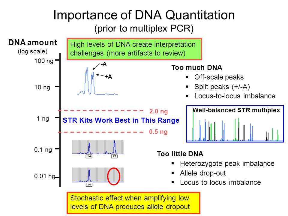 importance off dna typing Forensic dna typing, 2nd edition  importance of dna quantitation (prior to multiplex pcr) dna amount (log scale) 05 ng-a +a too much dna off-scale.