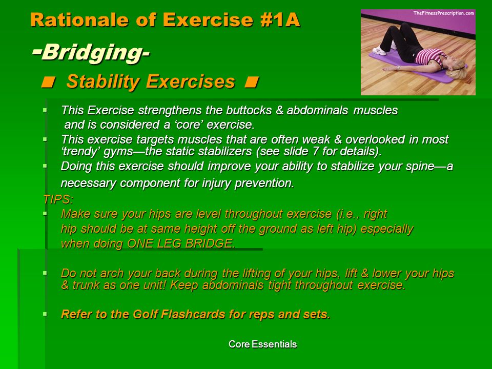 Rationale of Exercise #1A -Bridging- < Stability Exercises <