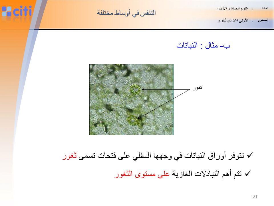تتوفر أوراق النباتات في وجهها السفلي على فتحات تسمى ثغور