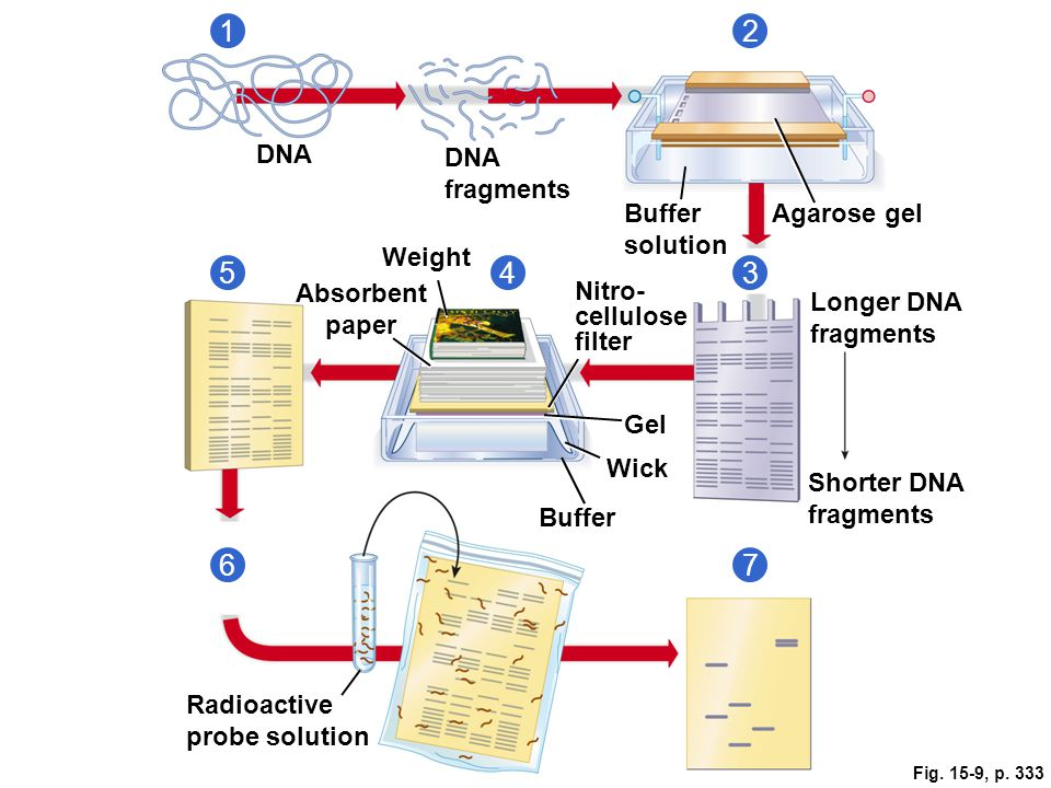 Chapter 15 Dna Technology And Genomics Ppt Video Online