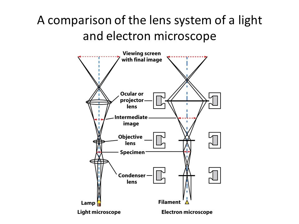 Light Microscope Vs. Electron Microscope: A Detailed Comparison