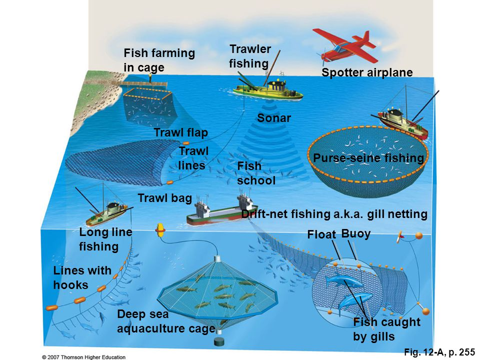 Sustaining aquatic biodiversity ppt download for Drift net fishing