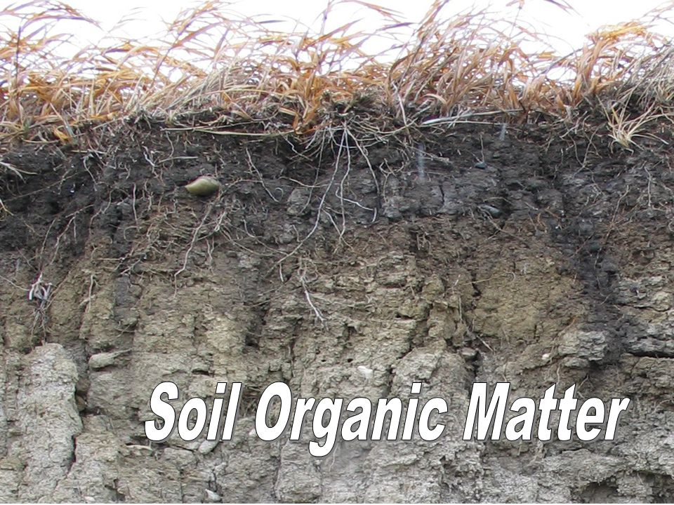 Cation exchange capacity ppt video online download for Soil organic matter