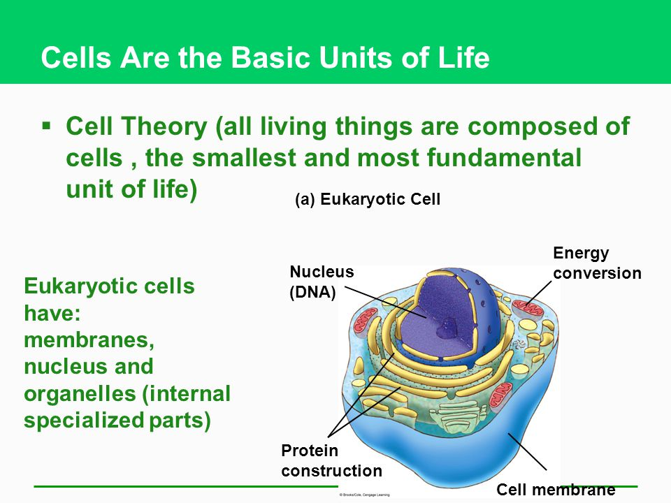 an analysis of the cell the fundamental structural unit of all living organisms