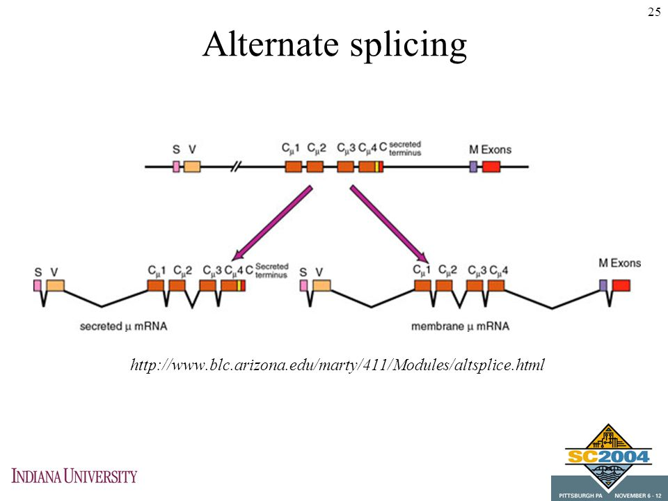 alternate splicing Splicing is when individuals parts, known as the exons, of a gene are brought together to make and messenger rna (mrna) the mrna is then translated into the protein product.
