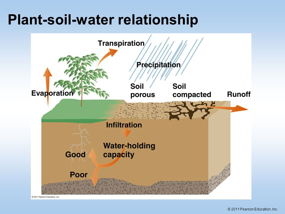 soil and plant relationship