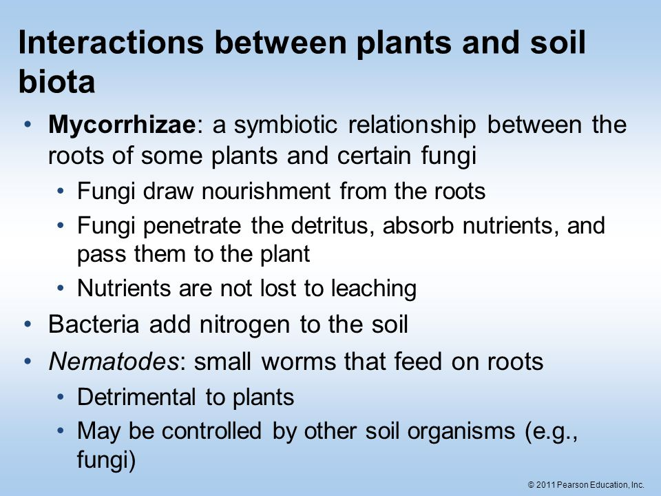 soil and plant relationship pdf
