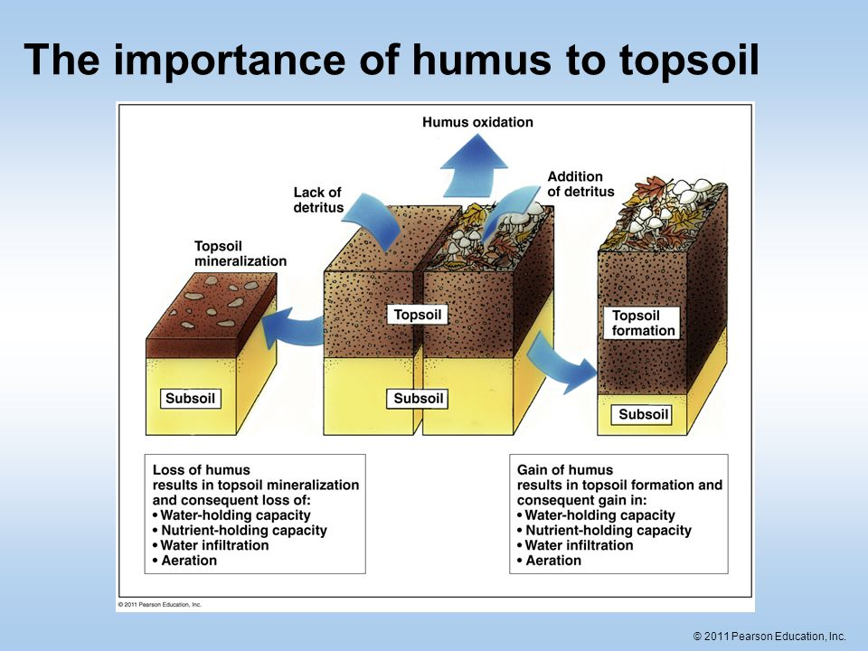 Soil the foundation for land ecosystems ppt download for Importance of soil minerals
