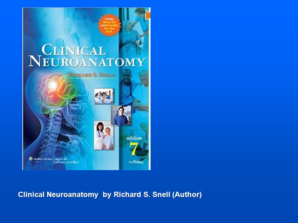 Dymocks Clinical Anatomy By Regions By Richard S Snell 2416314