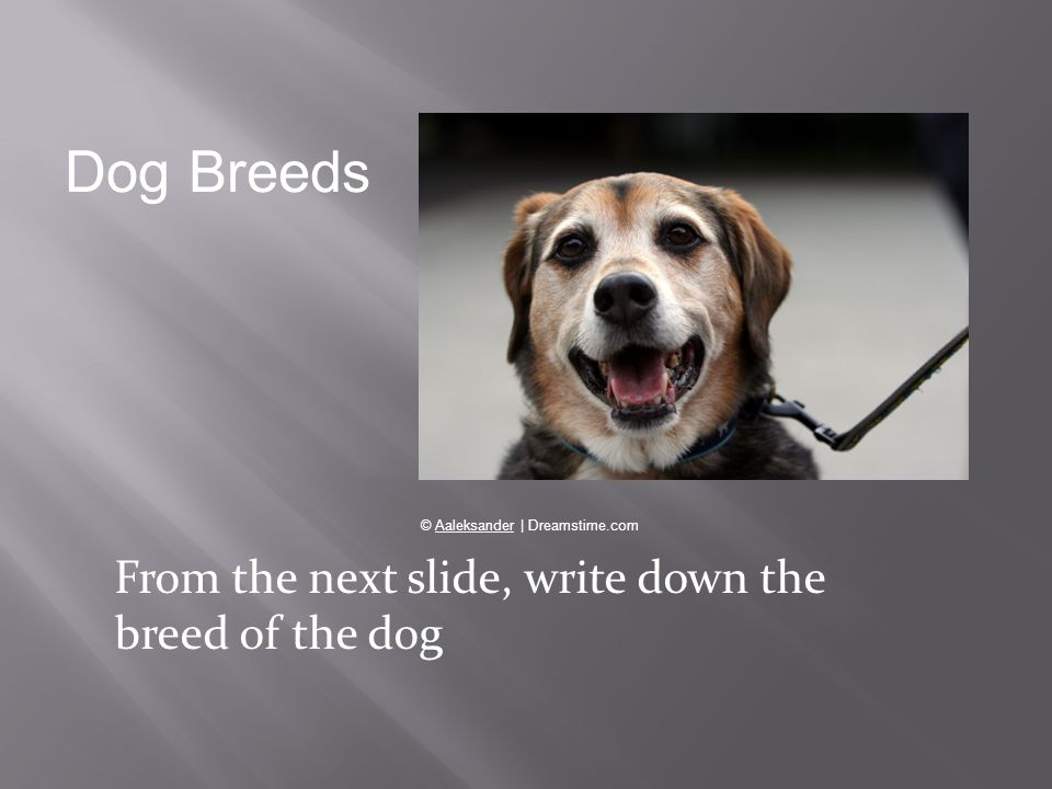 Dog Breeds From the next slide, write down the breed of the dog