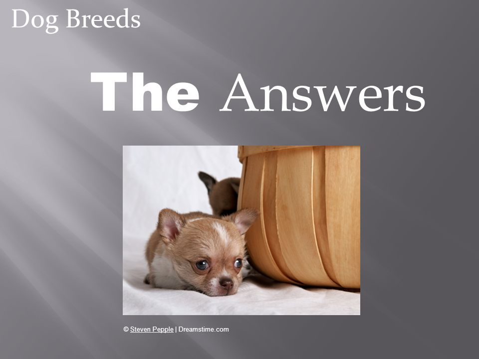Dog Breeds The Answers © Steven Pepple | Dreamstime.com