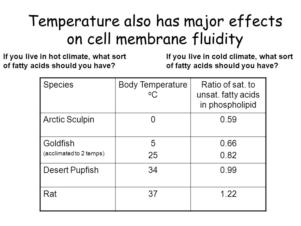 can different temperature effect the cell Temperature can effect the efficiency of electricity production from solar panels.