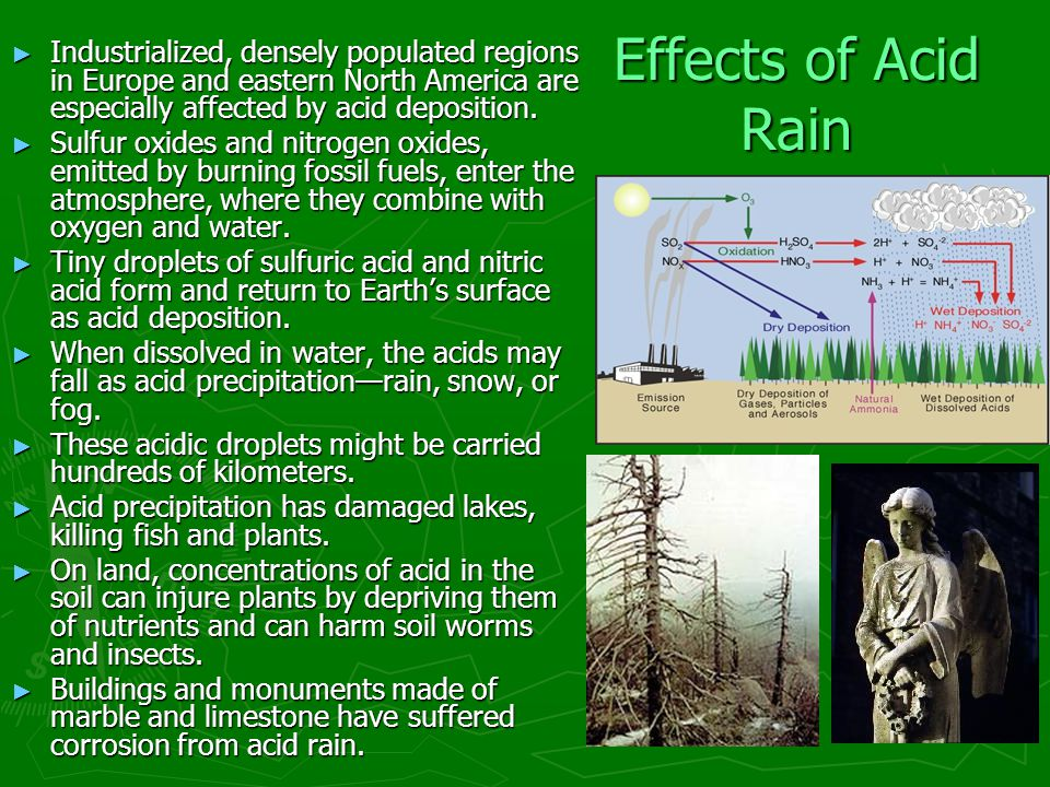 effects of acid rain to earthworms Need writing essay about effects of acid rain order your non-plagiarized college paper and have a+ grades or get access to database of 82 effects of acid rain.