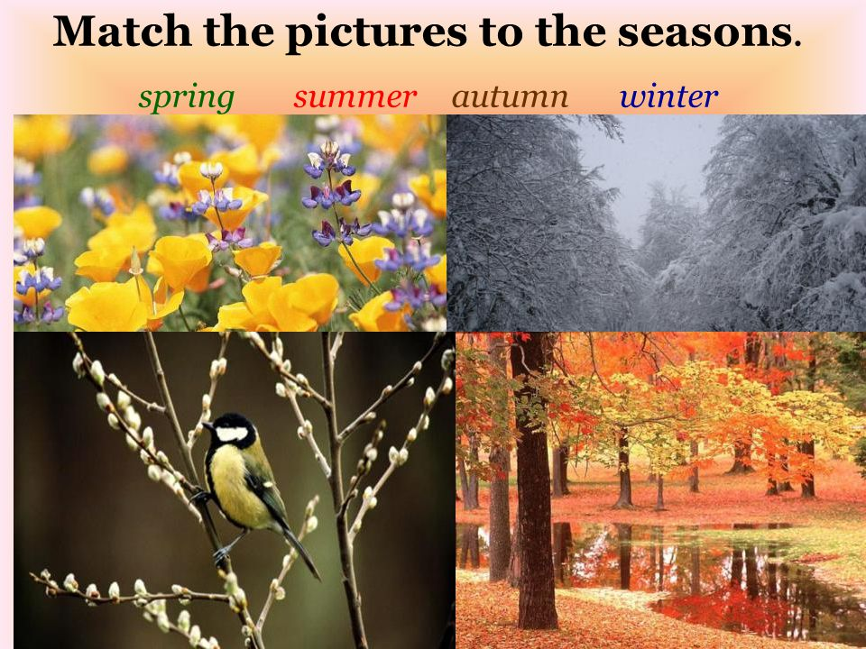 Match the pictures to the seasons. spring summer autumn winter