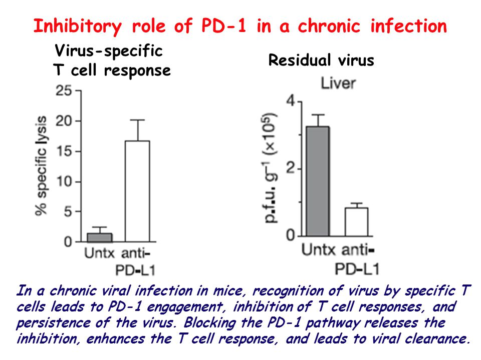 Inhibitory role of PD-1 in a chronic infection