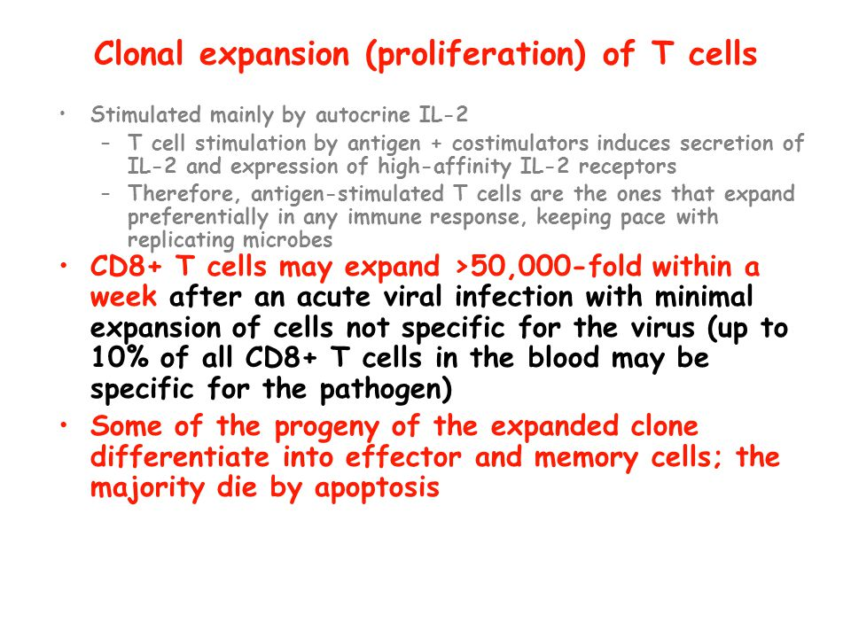 Clonal expansion (proliferation) of T cells