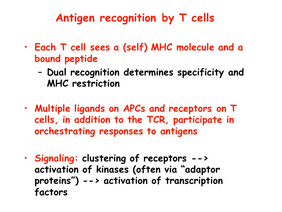 Antigen recognition by T cells