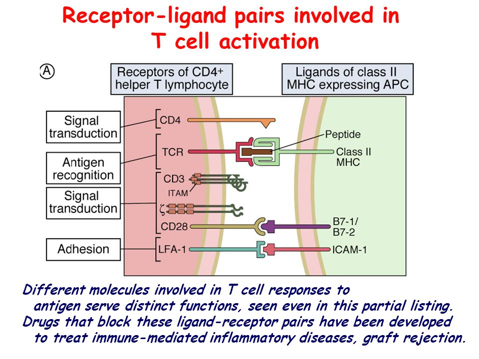 Receptor-ligand pairs involved in