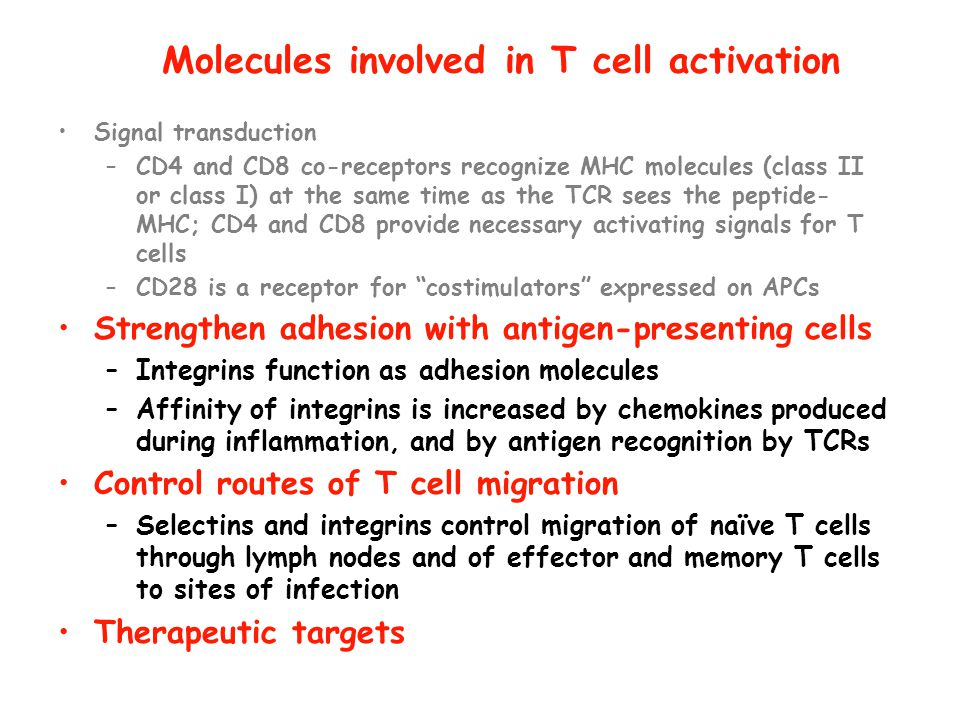 Molecules involved in T cell activation