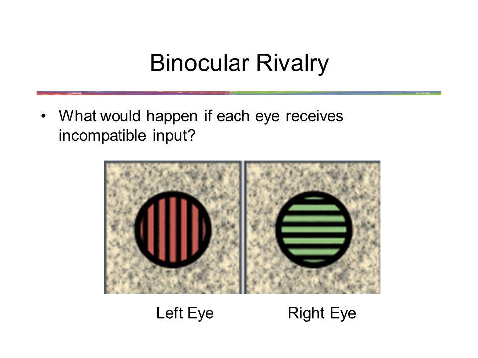 Binocular Rivalry What would happen if each eye receives incompatible input Left Eye Right Eye
