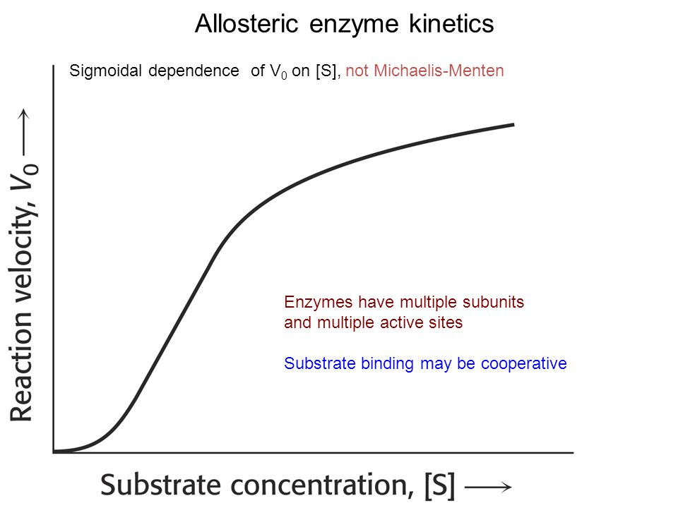 Allosteric enzyme kinetics