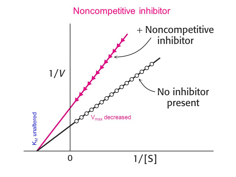 Noncompetitive inhibitor