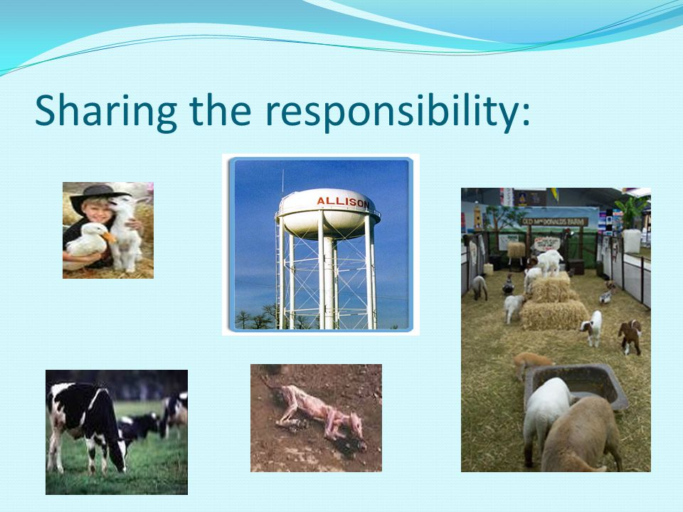 Sharing the responsibility: