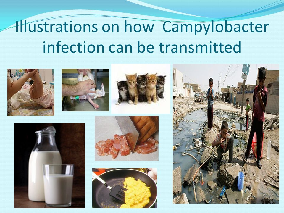 Illustrations on how Campylobacter infection can be transmitted