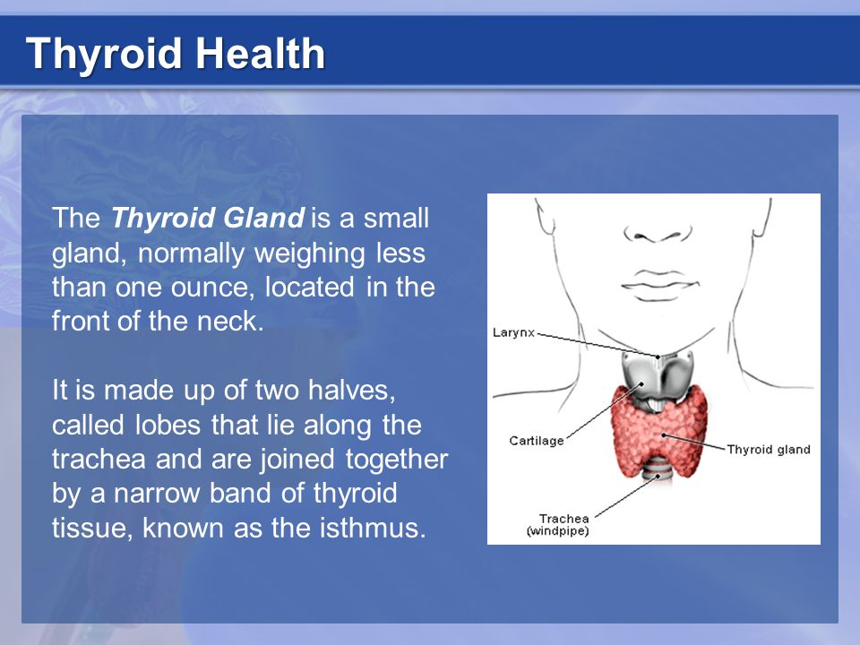 Thyroid Health The Thyroid Gland is a small gland, normally weighing less than one ounce, located in the front of the neck.